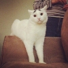 thumbs sam eyebrow Sam the cat has eyebrows (photos)