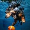 thumbs underwater dogs 1 Underwater dogs in photos