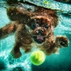 thumbs underwater dogs 11 Underwater dogs in photos