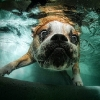 thumbs underwater dogs 9 Underwater dogs in photos