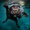 thumbs underwater dogs Underwater dogs in photos