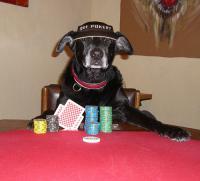 poker-dogs.jpg