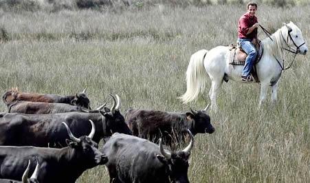 horseback_sarko.jpg