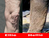 melanie-griffith.png