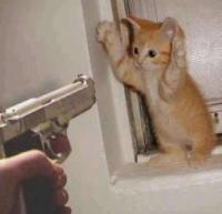 cat-burglar-anorak.JPG