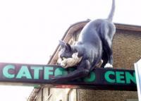 catford.jpg