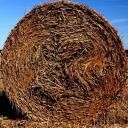 roll-in-the-hay.jpg