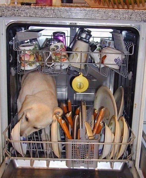 dishwasher death When Dishwashers Kill   Scientists Find New Way For One In Four Of Us To Die