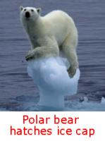 drowning polar bear Are Polar Bears Drowning Or Just Waving?