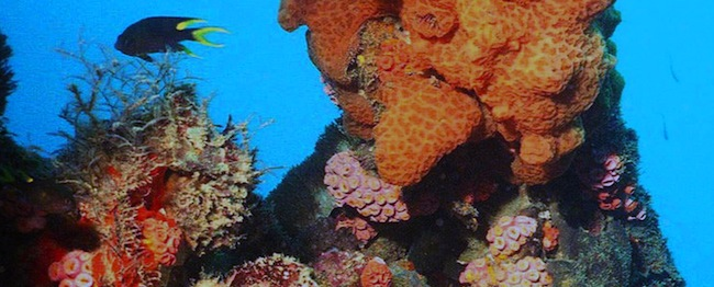PA 5607364 Global warming makes coral reefs grow