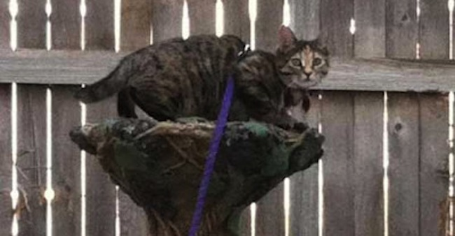 cats jog Man fined for tying non jogging cat to a rock