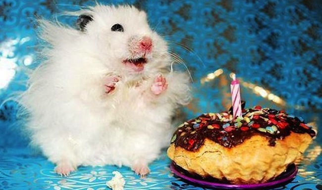 pet birthdays 80 The 10 best pet birthday party photos ever