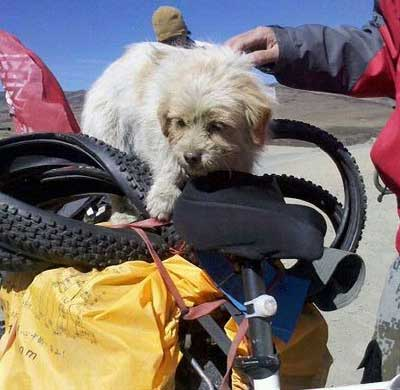 Xiao Sa Stray dog Xiao Sa runs 17000km from China to Tibet   dinner is served
