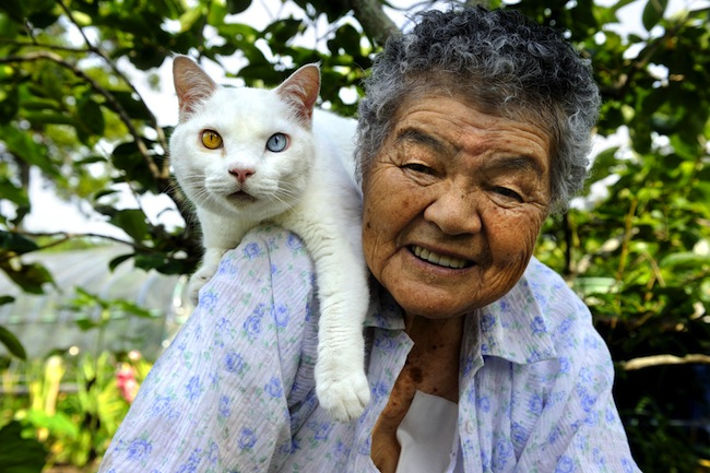 Fukumaru 1 The best photos of Misao and the cat called Fukumaru