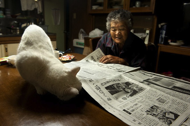 Fukumaru 3 The best photos of Misao and the cat called Fukumaru