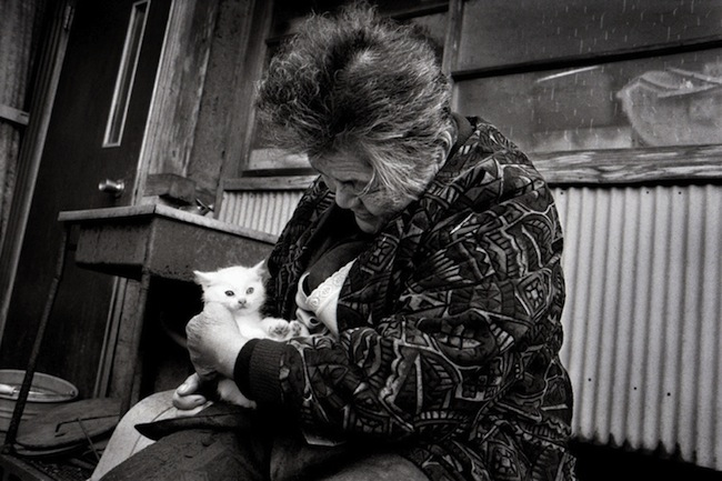 Fukumaru The best photos of Misao and the cat called Fukumaru