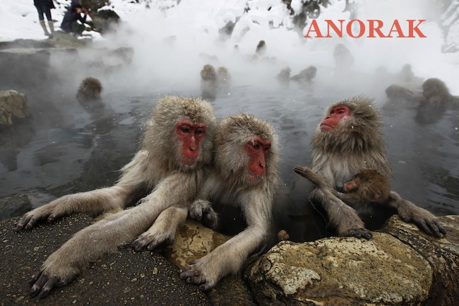 PA 10096665 The Snow Monkeys of Japan (photos)