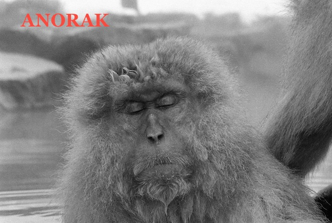 PA 10692790 The Snow Monkeys of Japan (photos)