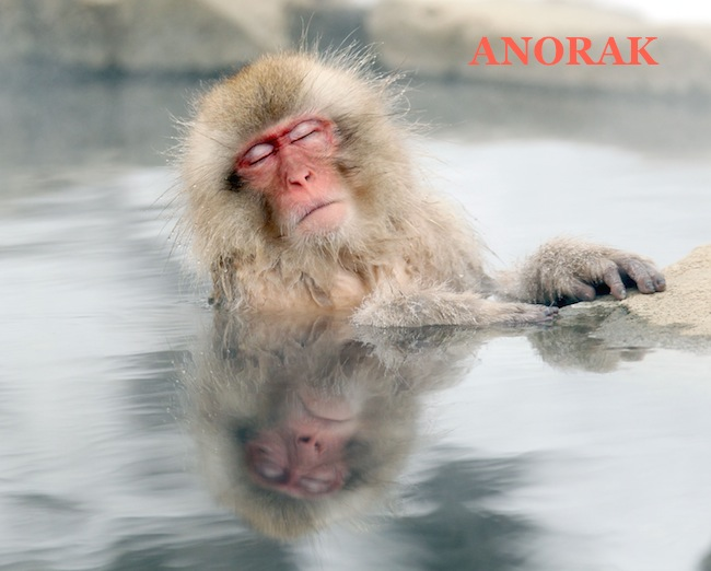 PA 12734654 The Snow Monkeys of Japan (photos)