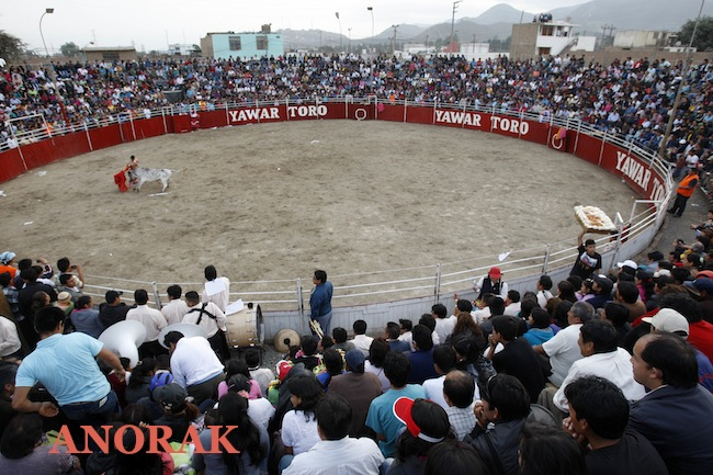 PA 15173133 Pictures of Perus Huanuco bullfighting festival