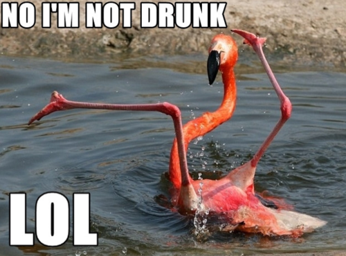 drunk-birds.png