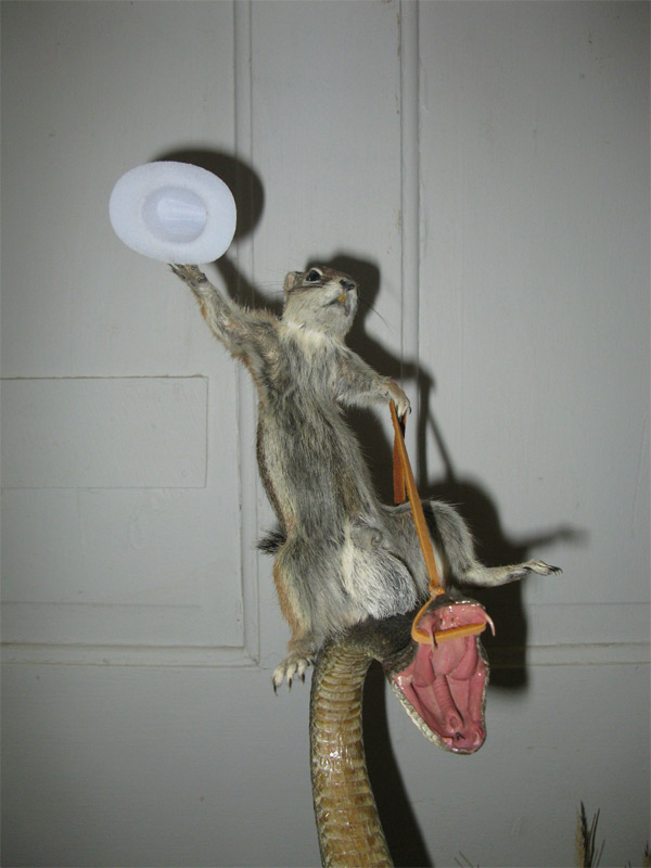 taxidermy 1 Great taxidermy: Rodeo Squirrel rides the Rattlesnake