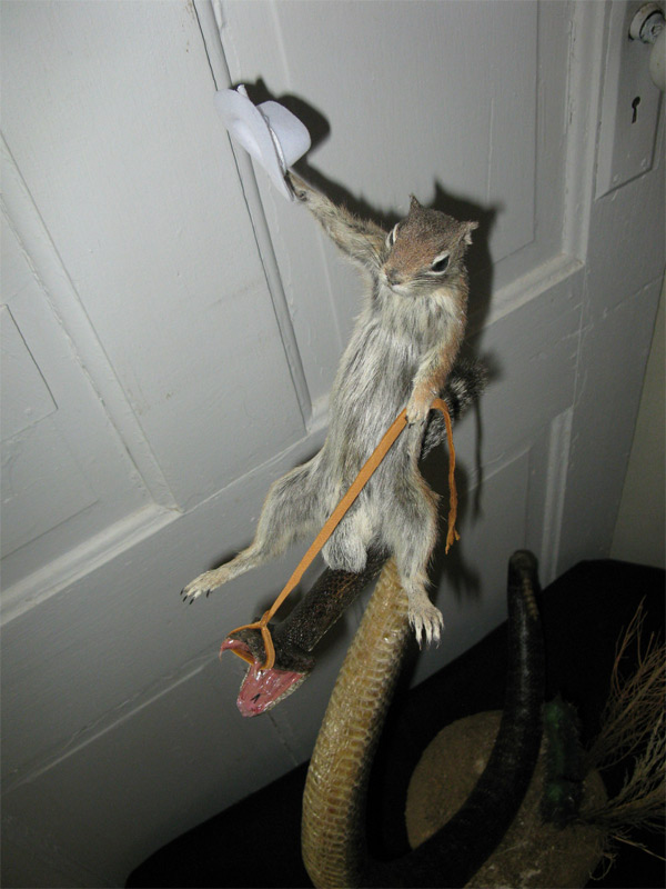 taxidermy 3 Great taxidermy: Rodeo Squirrel rides the Rattlesnake