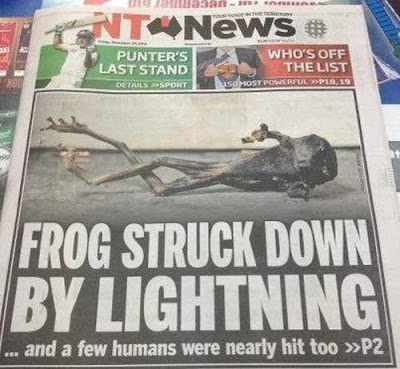 Frog struck down by lightning Hammy frog sacrifices life to save Australian family