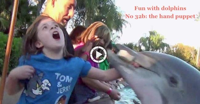 Jillian Thomas: When Dolphins Attack: Jillian Thomas Bitten