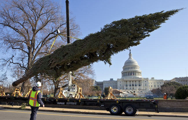 Anorak | The biggest Christmas Trees of 2012 – from New York and ...