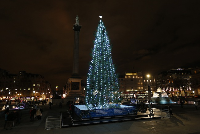 Anorak News The Biggest Christmas Trees Of 2012 From