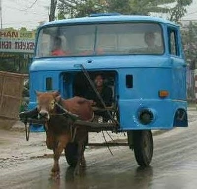cow car accident Cows crash a van and are much, much harder than you