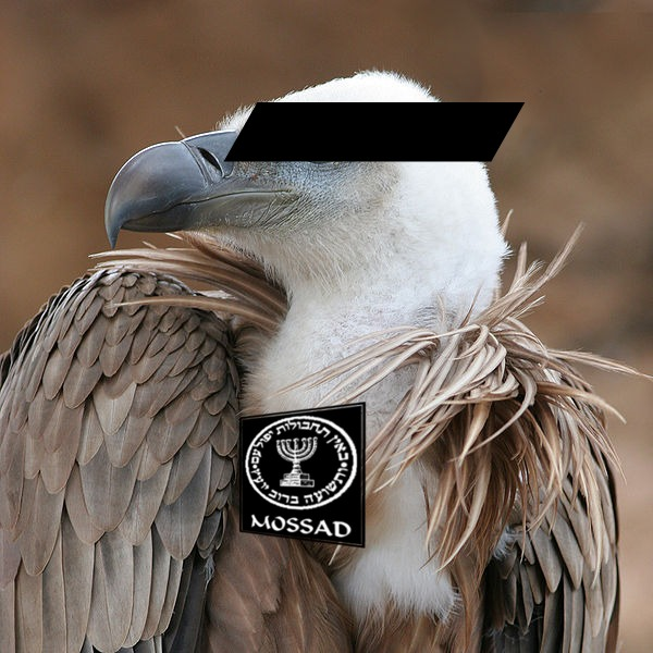 mosaad vulture Israeli Spy Vulture downed in Sudan   first they came for the corpses