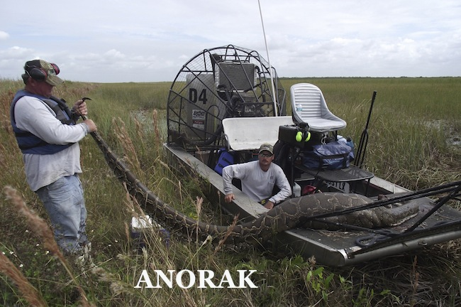 PA 12055683 On the Florida Everglades python hunt (photos)