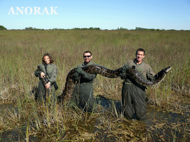 PA 13276982 On the Florida Everglades python hunt (photos)
