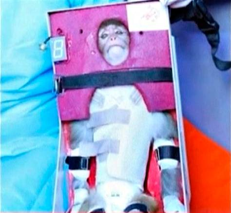iran monkey PETA dont like monkeys in space