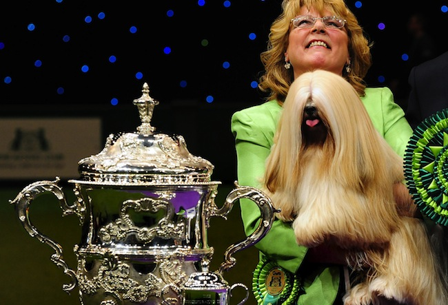 PA 13025582 Crufts to feature disgusting mongrels