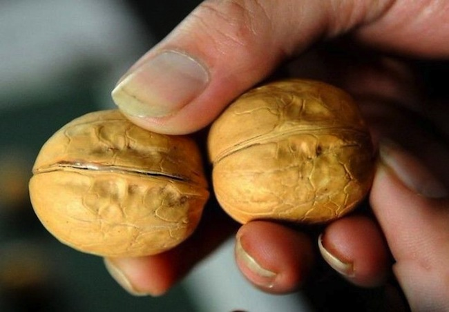wallnut china Buying fake walnuts in China (photos)