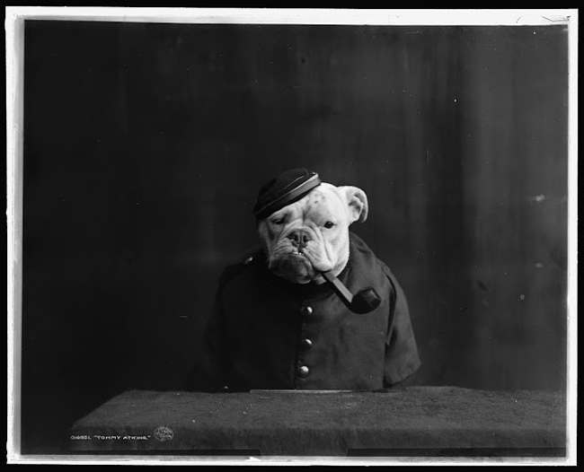 bulldog 3 1905: Portraits of Bulldogs in Fancy Dress