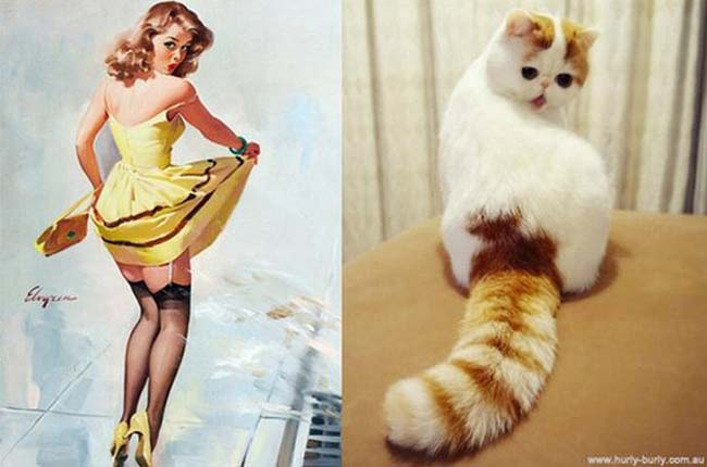 cat pin up girls 4