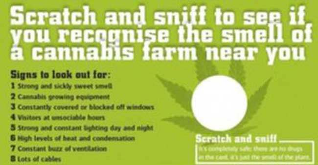 crimestoppers cards Crimestoppers release Marijuana scented scratch n sniff cards, which will make great roaches