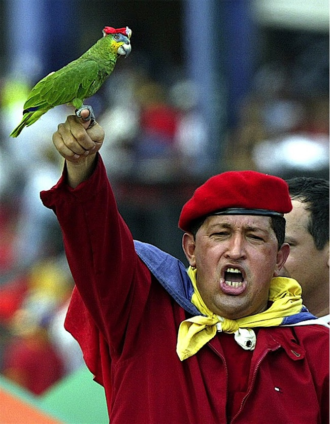 hugo chavez Venezuelan President Hugo Chávez has died, presumed poisoned by parrot