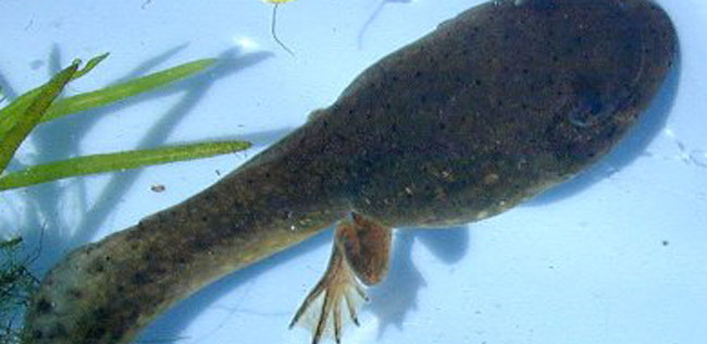 tadpole Tadpole fancier drank pets to smuggle them onboard plane