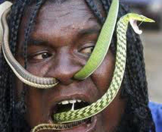 snake sex
