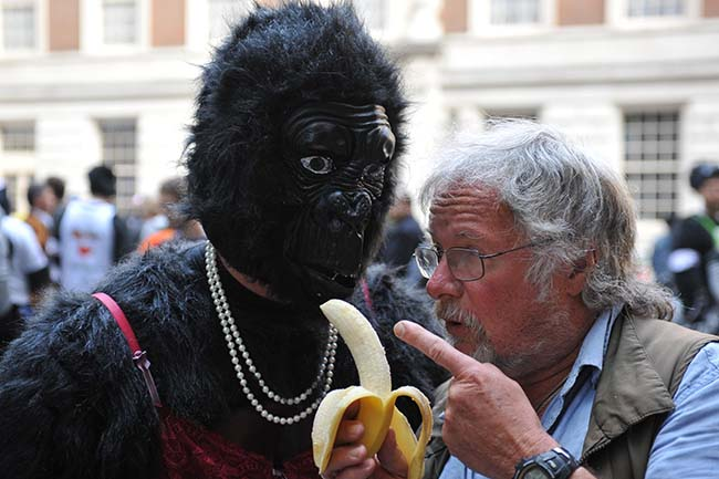 The Great Gorilla Run