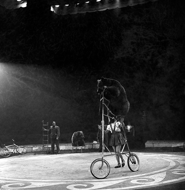 PA 6404799 Who stole the bears bicycle? Circus performer seeks new act