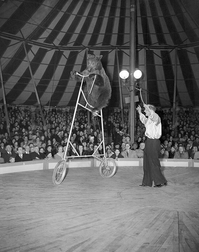 Hans Grocker shows his high riding bear