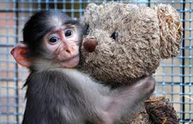 bear monkey