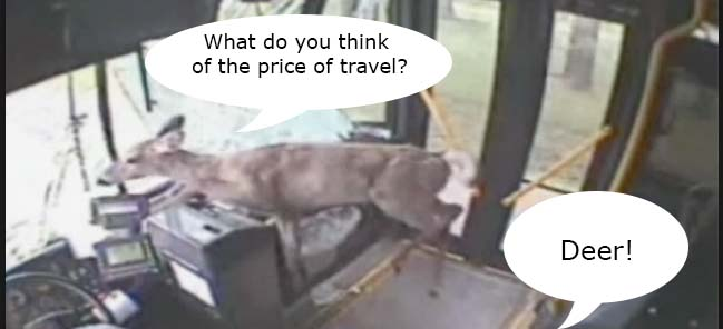 bus Watch the video of a stupid deer leaping through a bus window
