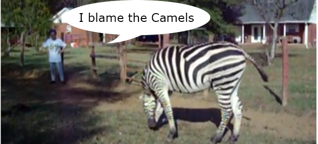 smoking zebra copy Wambui the Zebra puts out cigarettes with his urine (video)